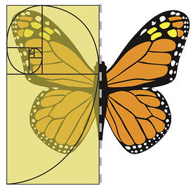 Array_ButterflySymmetry